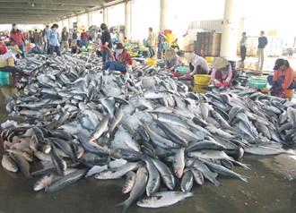 全球变暖冲击台渔业 传统乌鱼鱼场不复当年