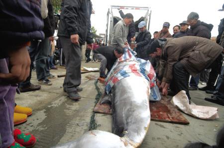 福建省二级保护动物