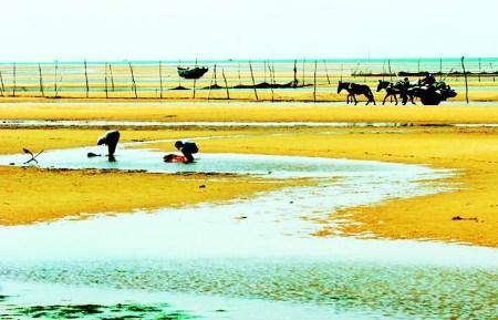 白沙湾生态园