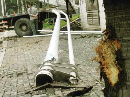 """树皮被""""削""""了,碗口粗的电杆也被撞断"""