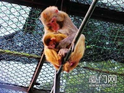 """海沧野生动物园频传喜讯 小长假期间""""小鬼当家"""""""