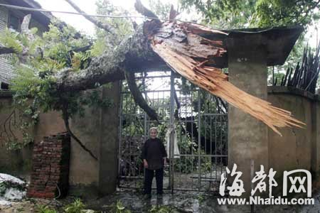 被大风刮断的大树倒在一农户家里
