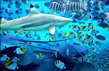 波拉波拉岛酒店内水下图片