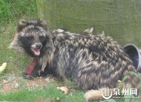 农业局野生动物保护