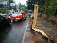 赵小波:莫兰蒂发威 树木被撕裂