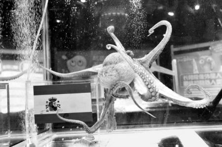 水中小动物魔法师图片