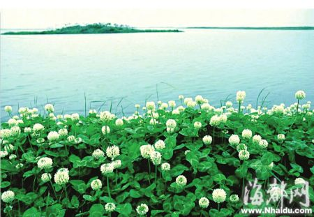 阳澄湖美人腿岛和莲花岛是阳澄湖生态休闲旅游