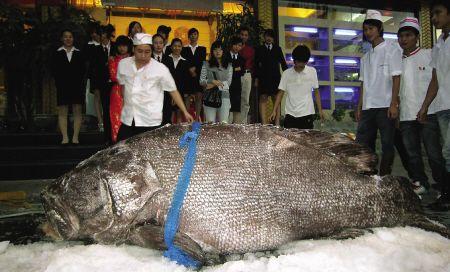 重968斤、长2.7米、宽1.1米 可供800余人食用