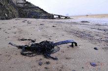 海边粘着油污的石头和固体是一大清理难题