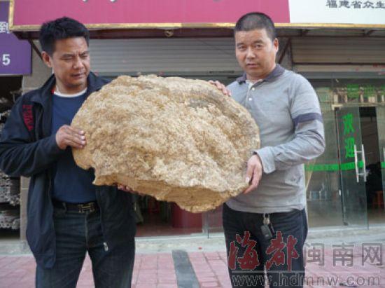 这株大灵芝来自西藏