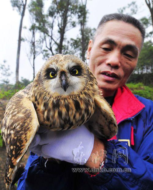 国家二级保护动物短耳�^