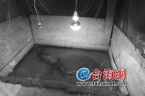 动物园里的鳄鱼洗浴霸