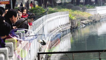 """福州西湖公园有人捞非洲鲫鱼 称""""一堆鱼10元"""""""