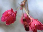 三月阳春暖 厦门赏花游