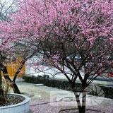 福州林阳寺