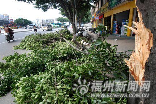 福州一渣土车拐弯刮断行道树树枝 砸中树下摩托车