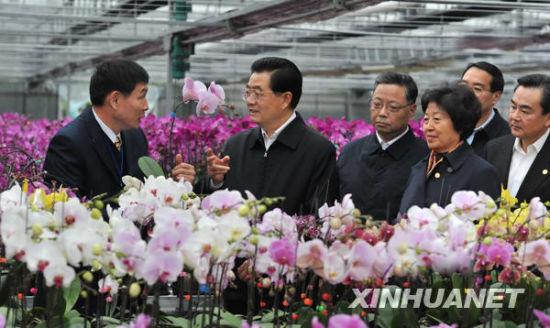 胡锦涛总书记春节前夕在福建漳州看望台湾同胞