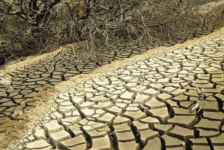 苏区水库河床随处可见龟裂的土壤
