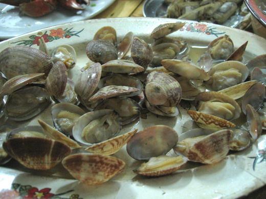 花蛤贝壳手工制作图片
