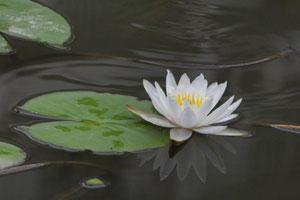 莫郁 摄于福州茶亭公园