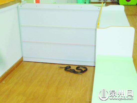 黑蛇游进幼儿园教室