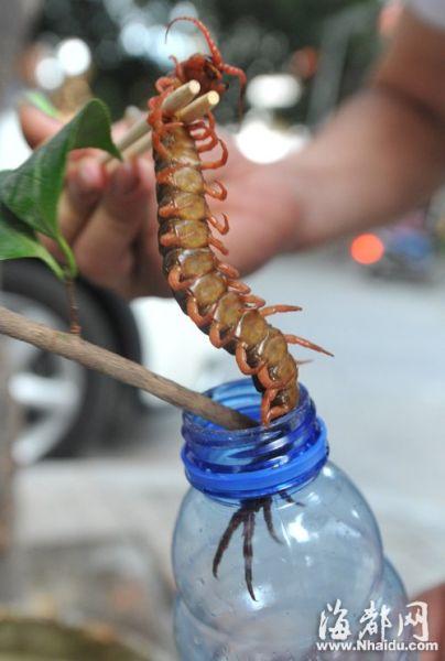 把这只蜈蚣抓进瓶子里费了很大的劲