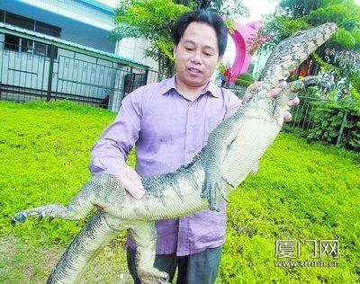 这条巨蜥有近两米长,体重超过5公斤。