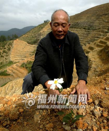 刚种不久的油茶开了花,村主任的脸上绽开笑容