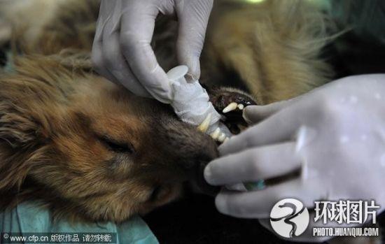 组图:揭秘陕西动物实验中心