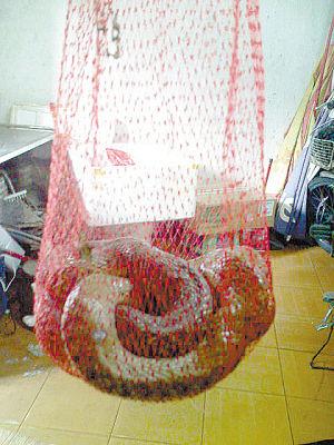 工商人员当场没收了小贩的野生蛇