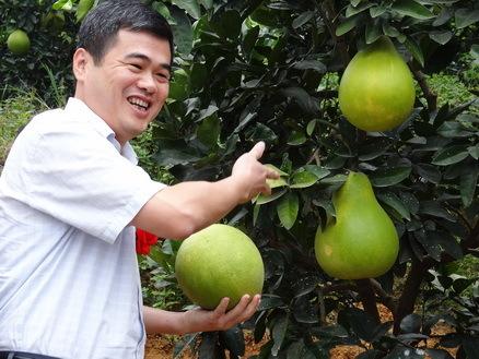 平和县长黄劲武摘柚子
