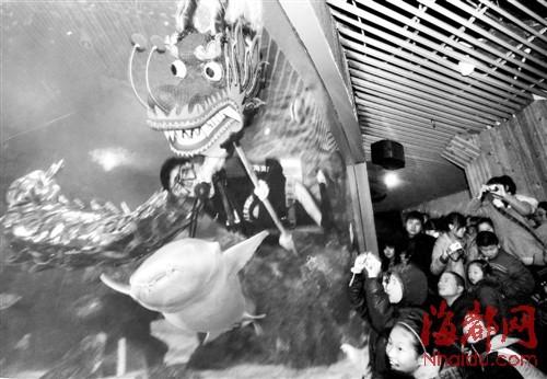 左海公园海底世界,水下舞龙表演让游客大开眼界
