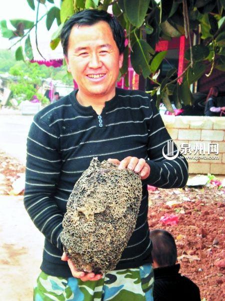 晋江一男子地里挖出6斤白蚁窝 开价2万不肯卖