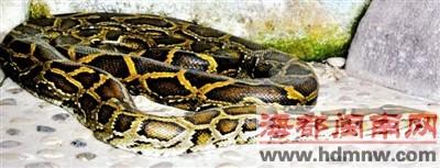 昨日惊蜇,冬眠的蛇也苏醒了