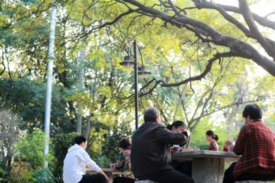 龙岩东肖森林公园十大奇观(2)_城市频道