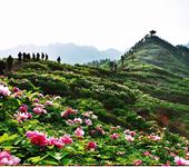垫江牡丹文化节