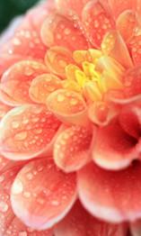 邂逅花开满园