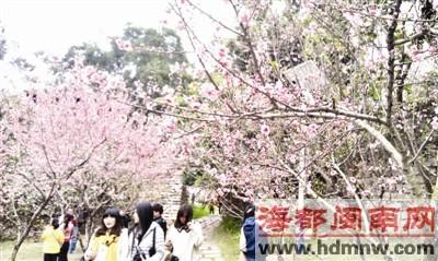 三月桃花始盛开