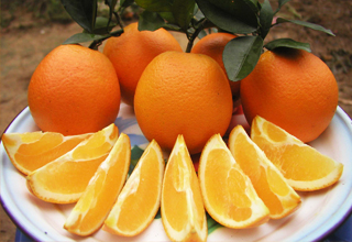 美味的奉节脐橙