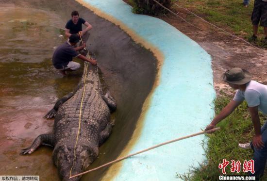 菲律宾所捕世界最大鳄鱼入选吉尼斯纪录(组图)