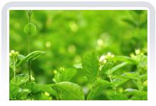 赏花:香浓中透着淡雅,驱走暗淡与陈旧,带来绿意和芬芳。