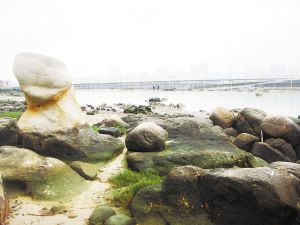 """海石嶙峋,石头纹上可见""""碧波""""。 邱雅萍 摄"""
