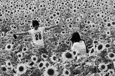 秋季也有向日葵观赏