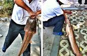 福州西湖钓起1米长鲶鱼 过路女百元买下放生