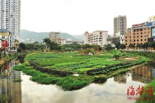 下磨溪附近的居民在溪边种植了许多蔬菜,日常灌溉也使用溪水