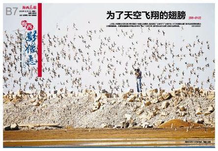 海沧九龙江口的候鸟群。摄影 蓝鹊