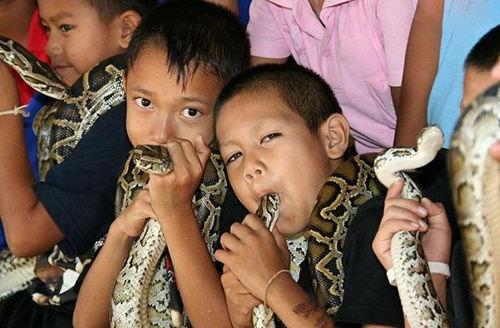 泰国眼镜蛇村