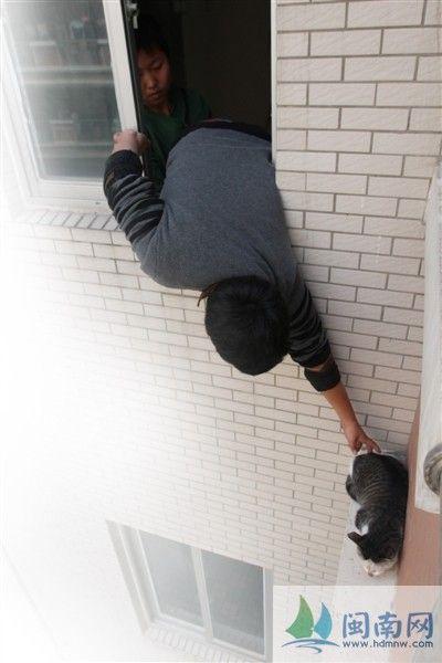 义工从窗户探身,试图抓住小猫
