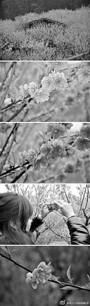 溪源峡谷桃花盛开,惹人喜爱