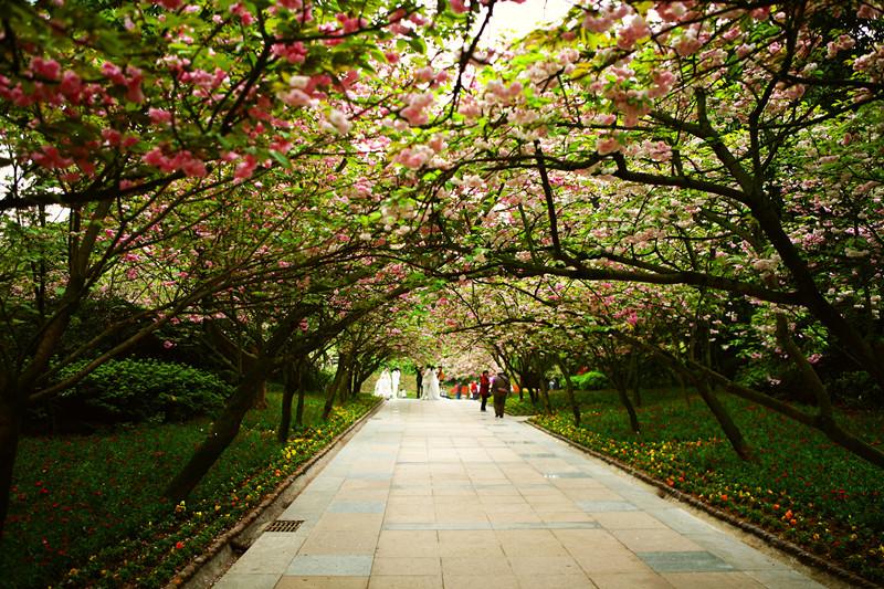 """找出来,带他去@重庆南山植物园 """"补花"""",樱花,茶花   &nbsp&nbsp&"""